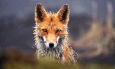 Dünyanın en tehlikeli hayvan türleri