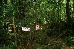 Japonya intihar ormanı