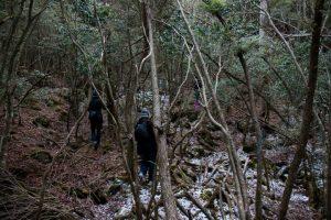 japonya ormanı