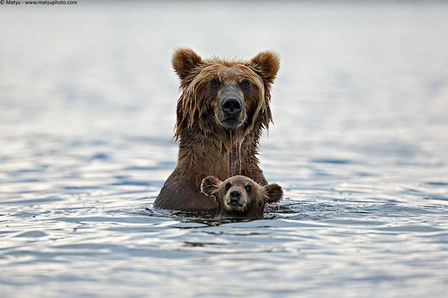 ayı yavrusu