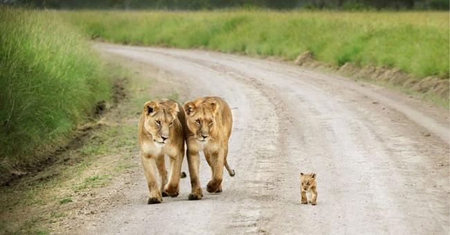 kaplan aile