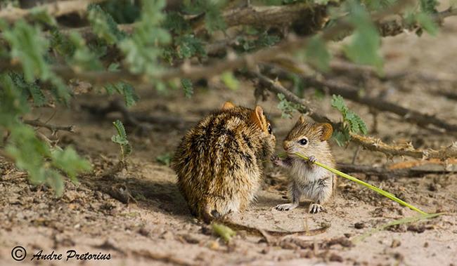 Hayvanlarda ebeveynlik