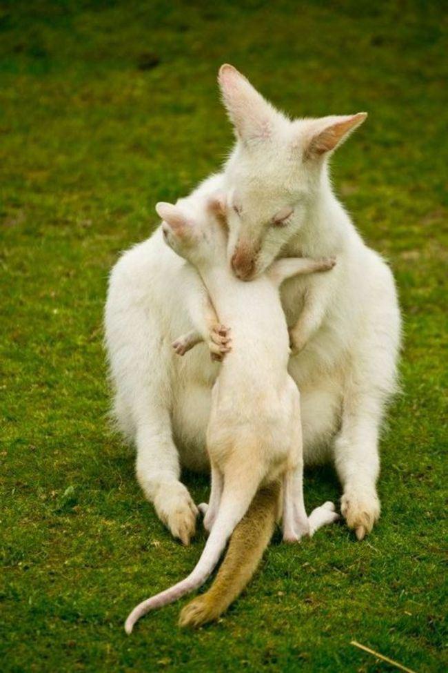 anne tavşan