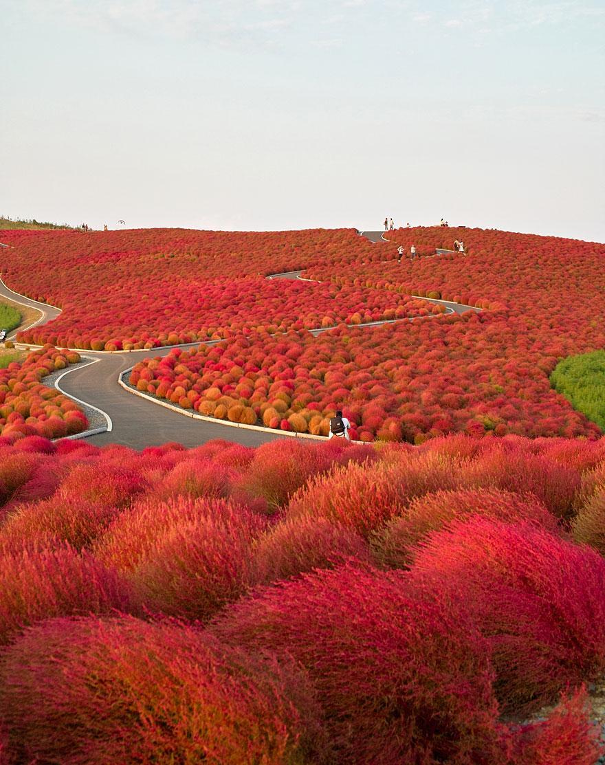 Japonyada bulunan parklar
